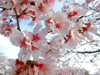 近くの花のアップ - No.978360