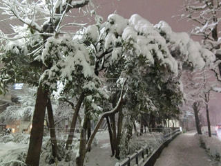 雪に覆われた木 - No.981710
