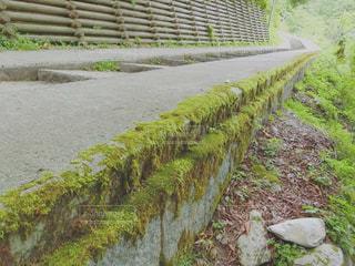 道の端に木のパスの写真・画像素材[993119]