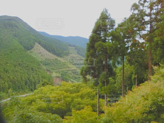 近くに緑豊かな緑の丘陵のアップの写真・画像素材[993121]