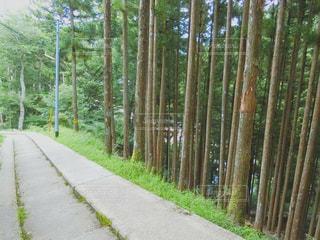 それの両側に木があるパスの写真・画像素材[993122]