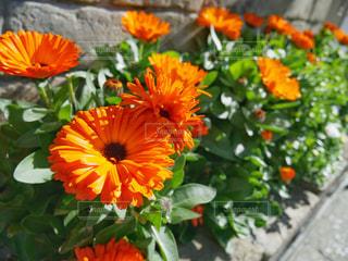 カラフルな花の植物の写真・画像素材[1031229]