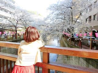 ベンチに座っている女の子の写真・画像素材[1112673]