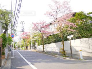 通り側の木と空の道の写真・画像素材[1122229]