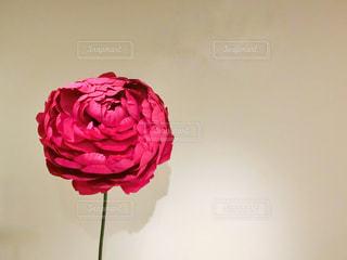 植物にピンクの花の写真・画像素材[1133722]
