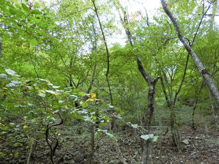 フォレスト内のツリーの写真・画像素材[1133732]
