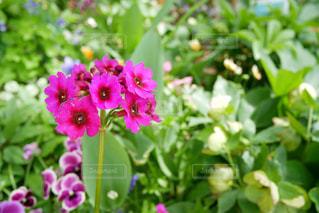 近くの花のアップの写真・画像素材[1167546]