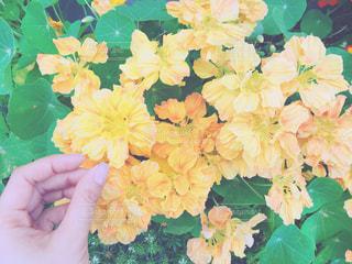 花を持っている人の写真・画像素材[1192214]