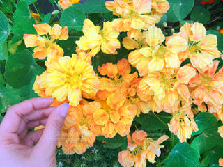 近くの花のアップ - No.1192215
