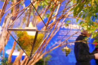 近くの木のアップの写真・画像素材[1195751]