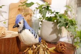 木製テーブルの上に座っている鳥の写真・画像素材[1245911]