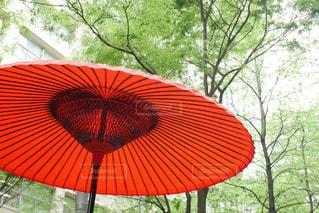 和傘と森林浴の写真・画像素材[2069160]