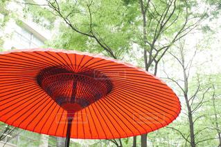 傘の写真・画像素材[2069162]