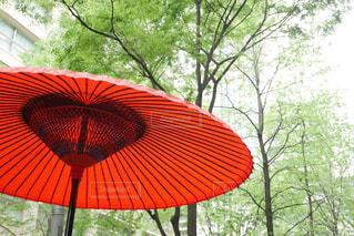 都会で和傘の写真・画像素材[2069164]