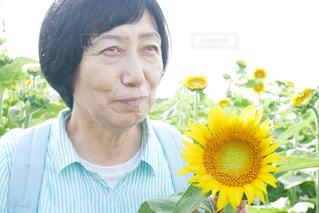 向日葵畑にいる、高齢者の女性の写真・画像素材[2245578]
