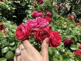 ピンクの花でいっぱいの花瓶の写真・画像素材[2285181]