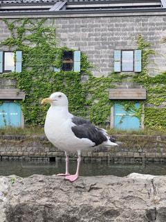 建物の前に立っている大きな白い鳥の写真・画像素材[2341090]