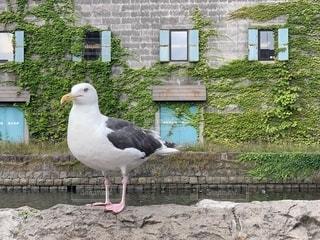 建物の前に立っている鳥の写真・画像素材[2341094]