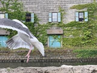 建物の前に立っている大きな白い鳥の写真・画像素材[2341100]