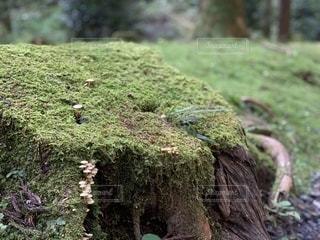 ハイキングで見つけた苔の写真・画像素材[2716397]