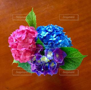 紫陽花の写真・画像素材[1253881]