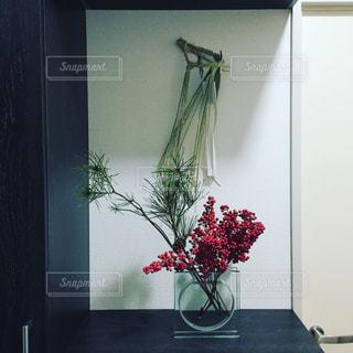 松の写真・画像素材[296409]