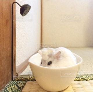 猫の写真・画像素材[4481]