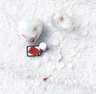桜の写真・画像素材[4434]