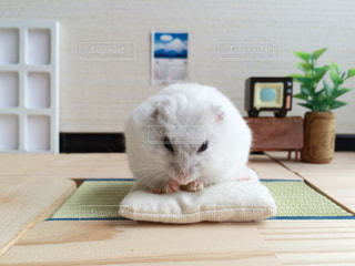 動物の写真・画像素材[276510]