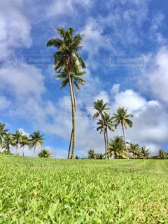 芝生のフィールドでヤシの木の写真・画像素材[1325818]