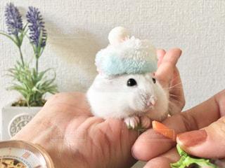 帽子をかぶるハムスターの写真・画像素材[1578754]