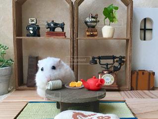 和室でほっこりむーさんですの写真・画像素材[2756332]