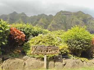 ハワイ、クアロア・ランチの写真・画像素材[2952655]