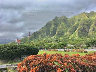 ハワイ、クアロア・ランチの写真・画像素材[2952660]