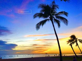 ヤシの木のあるビーチの写真・画像素材[2952667]