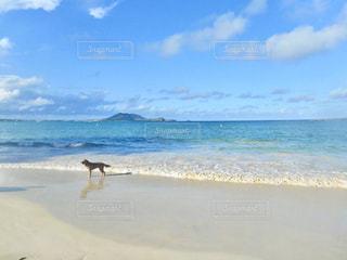 浜辺を散歩中の犬の写真・画像素材[2952664]