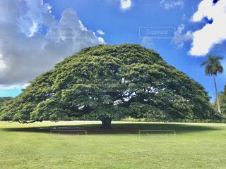 モアナルア庭園の写真・画像素材[2952669]