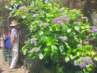 庭に立っている人の写真・画像素材[2952799]