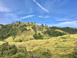 緑豊かな丘の中腹のクローズアップの写真・画像素材[2952805]