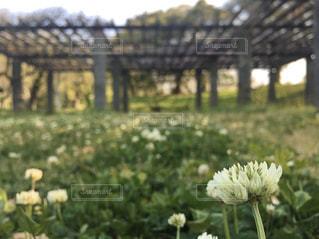 花のクローズアップの写真・画像素材[3108324]