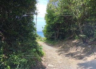 海へ続く道の写真・画像素材[3341287]