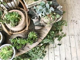 庭の植物の写真・画像素材[3369078]