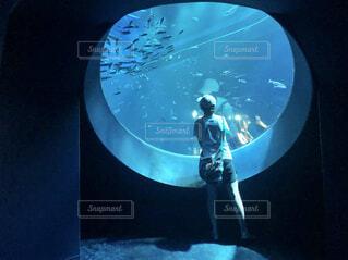 水族館の写真・画像素材[4626244]