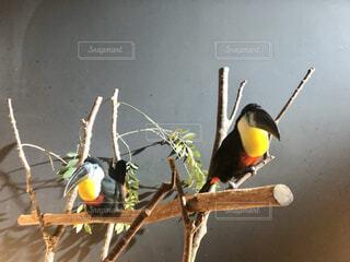 枝にとまる鳥の写真・画像素材[4626250]