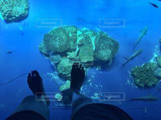 足元を泳ぐ魚たちの写真・画像素材[4626249]