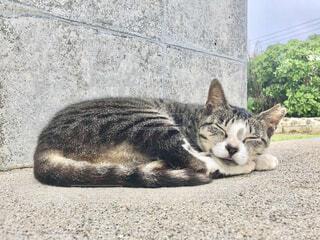猫の写真・画像素材[4626850]
