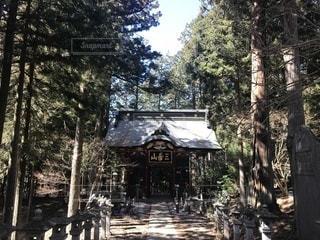 雑木林の木 - No.1031273