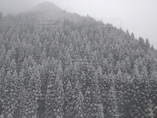 自然の写真・画像素材[275300]