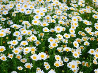 花の写真・画像素材[275330]