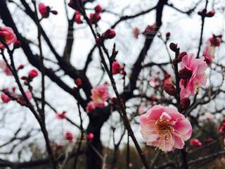 花の写真・画像素材[275336]